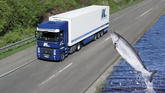 STI Freight Management, Fisch, Logistik